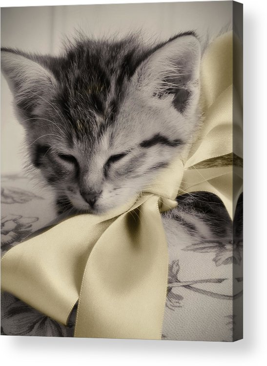 Kitten Acrylic Print featuring the photograph Soft by Amy Tyler