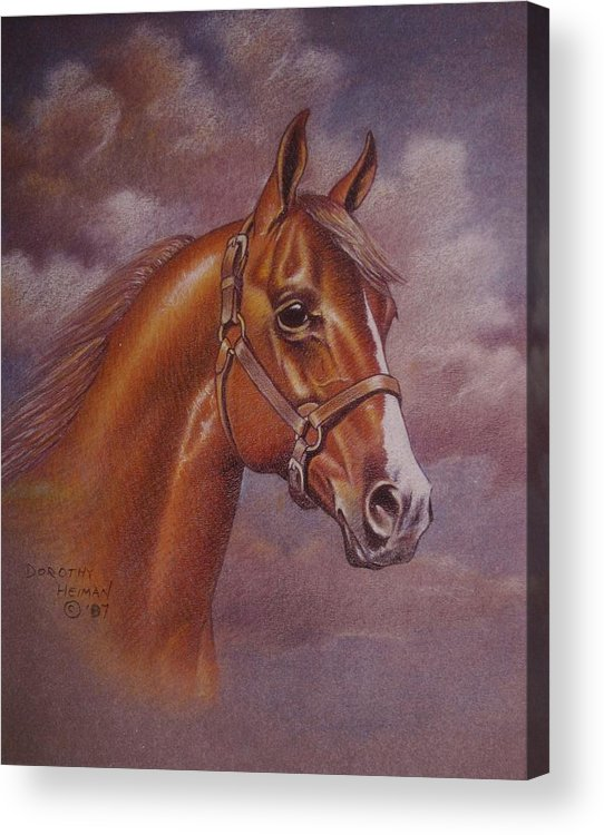 Acrylic Print featuring the painting Chestnut Quarter Horse by Dorothy Coatsworth