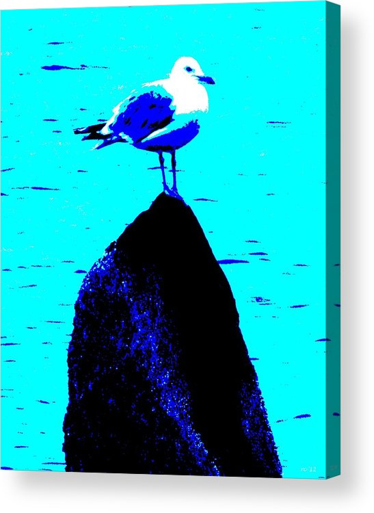 Seagull Acrylic Print featuring the photograph Seagull Scout by Rene Crystal