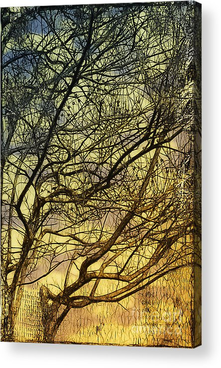 Gothic Acrylic Print featuring the photograph Ghosts Of Crape Myrtles by Judi Bagwell
