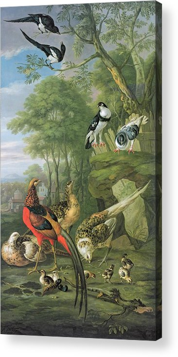 Ornithology Acrylic Print featuring the painting Cock Pheasant Hen Pheasant And Chicks And Other Birds In A Classical Landscape by Pieter Casteels