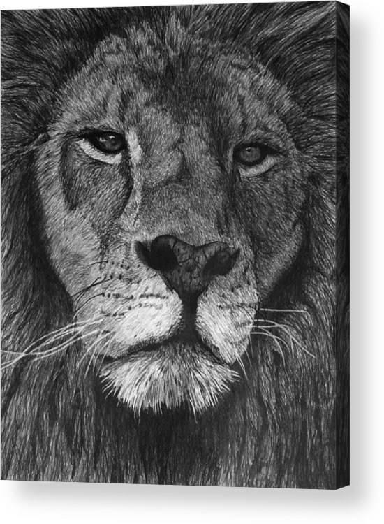 Lion Acrylic Print featuring the drawing Lion Of Judah by Bobby Shaw