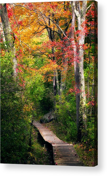 Autumn Acrylic Print featuring the photograph Autumn Boardwalk by Bill Wakeley