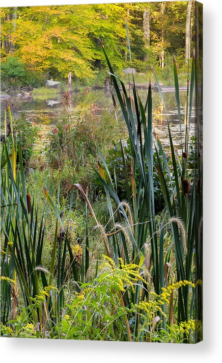 Swamp Acrylic Print featuring the photograph Autumn Swamp by Bill Wakeley