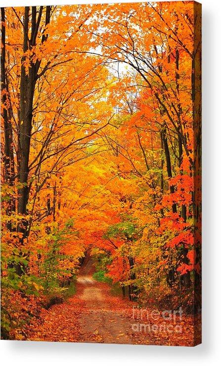 Autumn Acrylic Print featuring the photograph Autumn Tunnel Of Trees by Terri Gostola