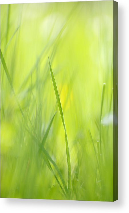 Spring Acrylic Print featuring the photograph Blades Of Grass - Green Spring Meadow - Abstract Soft Blurred by Matthias Hauser