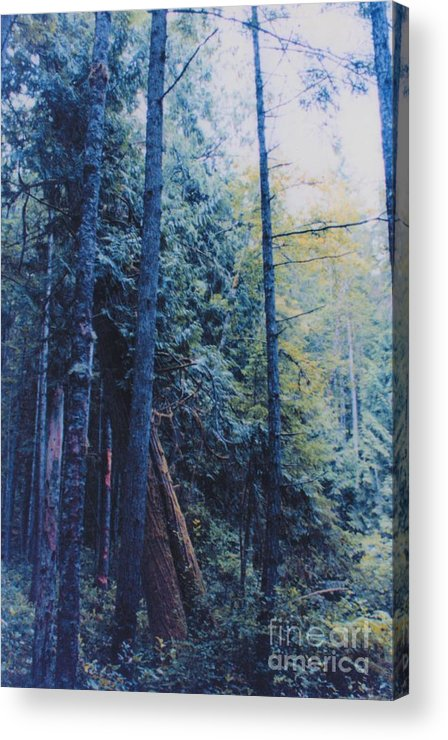 First Star Acrylic Print featuring the photograph Blue Forest By Jrr by First Star Art