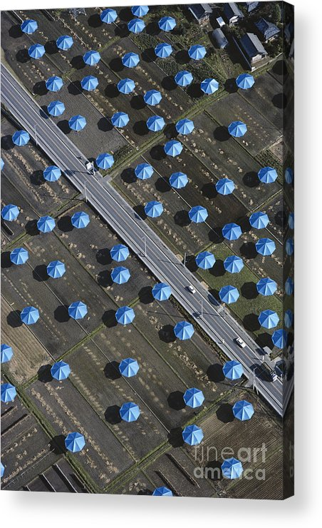 Art Acrylic Print featuring the photograph Christo Umbrellas In Japan by Georg Gerster