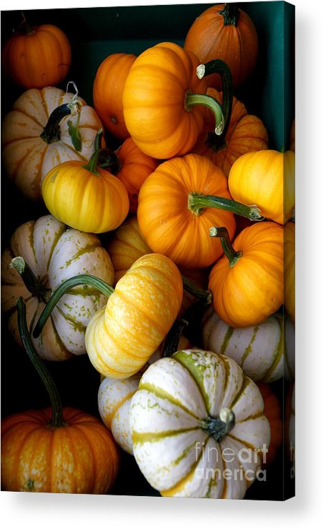 Farm Acrylic Print featuring the photograph Cinderella Pumpkin Pile by Kerri Mortenson