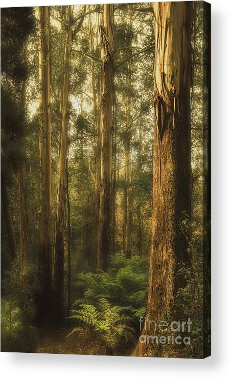Gum Acrylic Print featuring the photograph Ghostly by Andrew Paranavitana