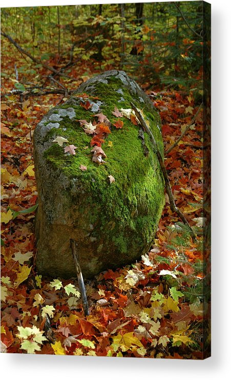 Mossy Rock...huge Rock. Maple Forest In Fall. Color. Maple Leaves. Beautiful Bold Image. Acrylic Print featuring the photograph Mossy Rock by Sandra Updyke