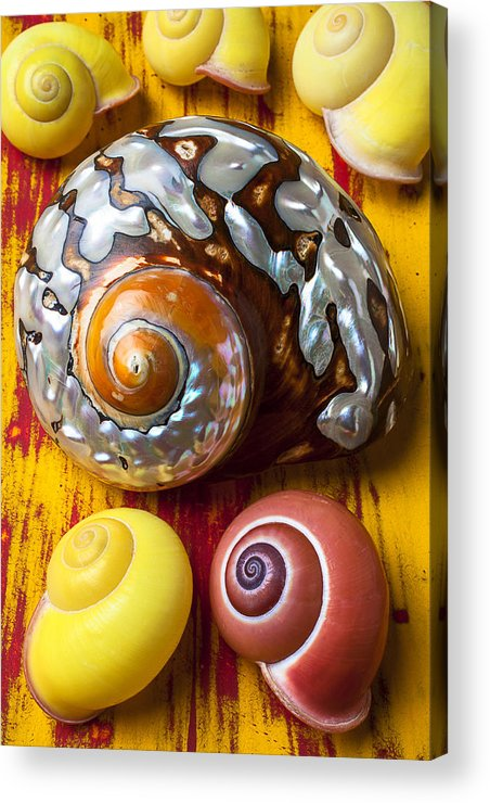 Six Acrylic Print featuring the photograph Six Snails Shells by Garry Gay