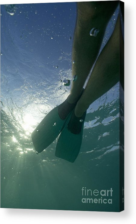 Snorkeling Acrylic Print featuring the photograph Snorkeller Legs With Flippers Underwater by Sami Sarkis