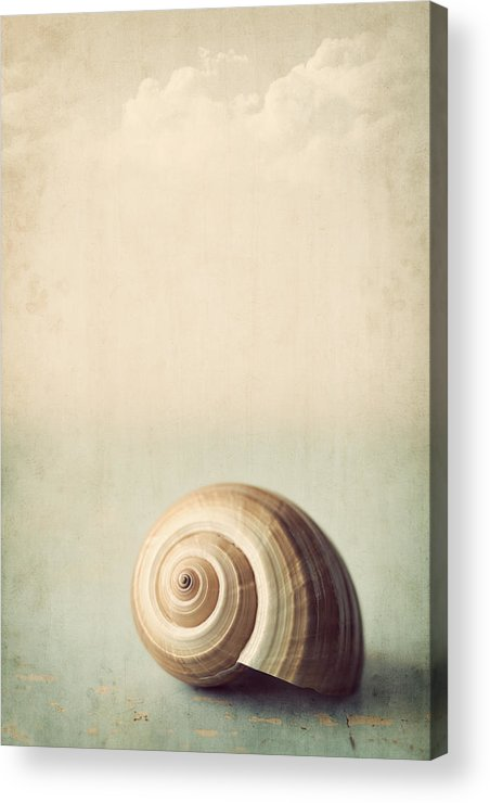 Shell Acrylic Print featuring the photograph Sojourn by Amy Weiss