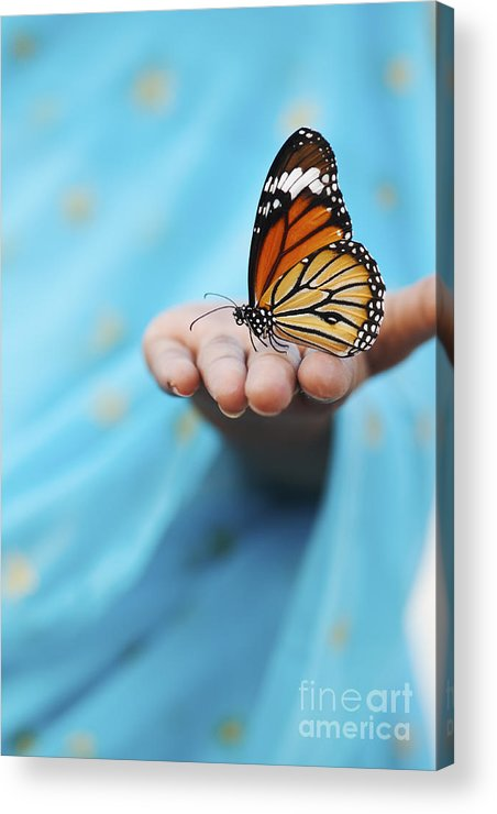 Indian Girl Acrylic Print featuring the photograph Striped Tiger Butterfly by Tim Gainey
