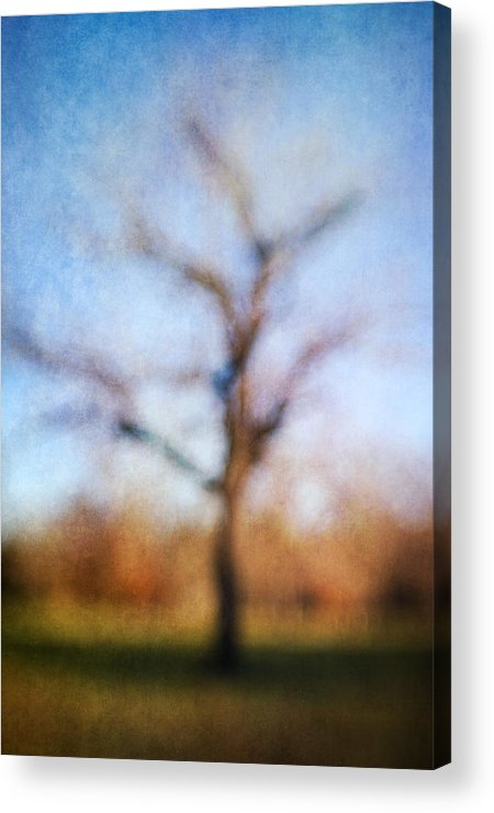 Blur Acrylic Print featuring the photograph Warner Park Tree by David Morel