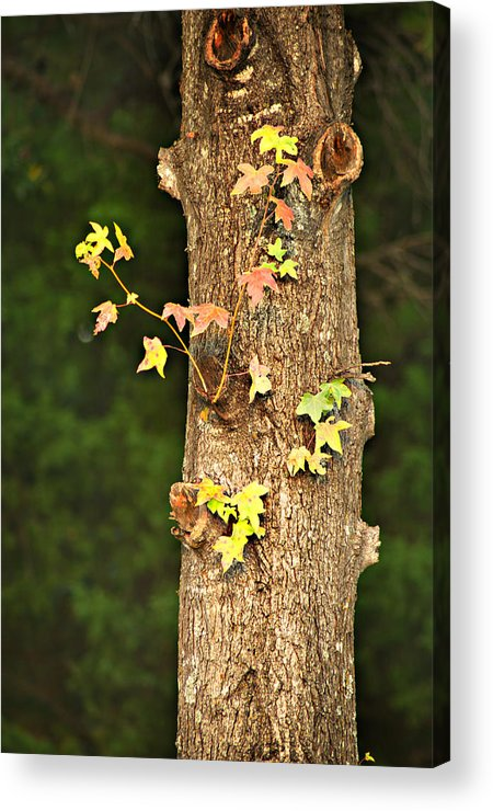 Autumn Acrylic Print featuring the photograph 1209-0859 September Tease by Randy Forrester