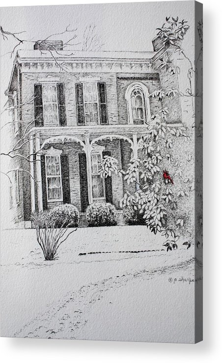 Historic Home Acrylic Print featuring the drawing Cardinal by Patsy Sharpe