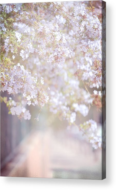 Spring Acrylic Print featuring the photograph Dreaming Of Spring by Jenny Rainbow