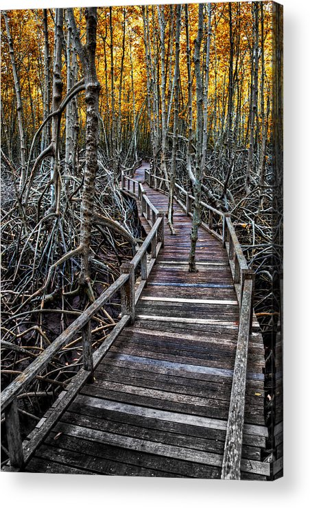 Area Acrylic Print featuring the photograph Footpath In Mangrove Forest by Adrian Evans