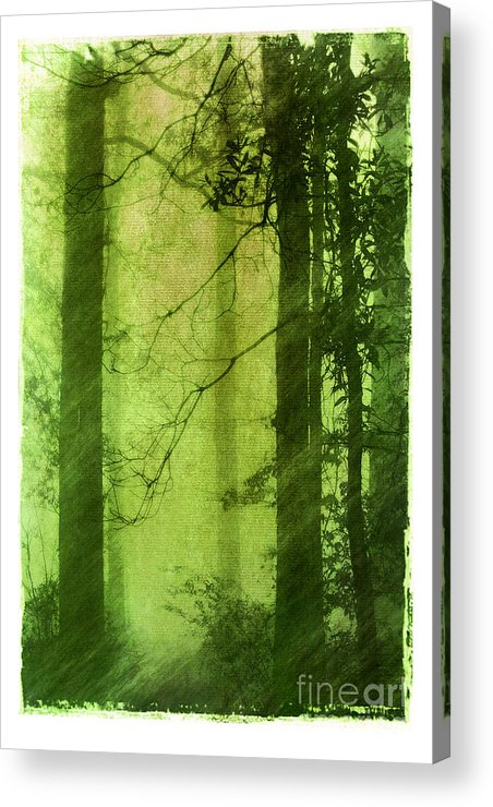 Green Acrylic Print featuring the photograph Mystical Glade by Judi Bagwell