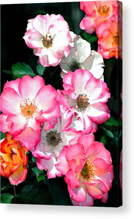Floral Acrylic Print featuring the photograph Rose 133 by Pamela Cooper