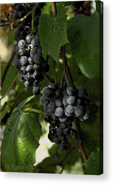 Grapes Acrylic Print featuring the photograph Almost Harvest Time by Michael Flood