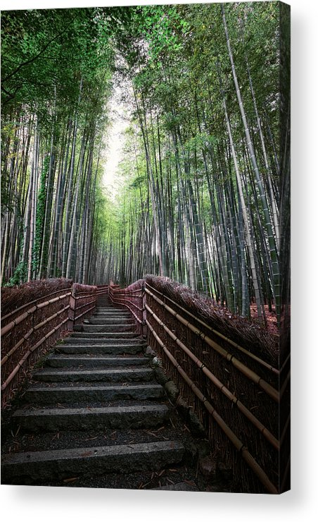Bamboo Acrylic Print featuring the photograph Bamboo Forest Of Japan by Daniel Hagerman