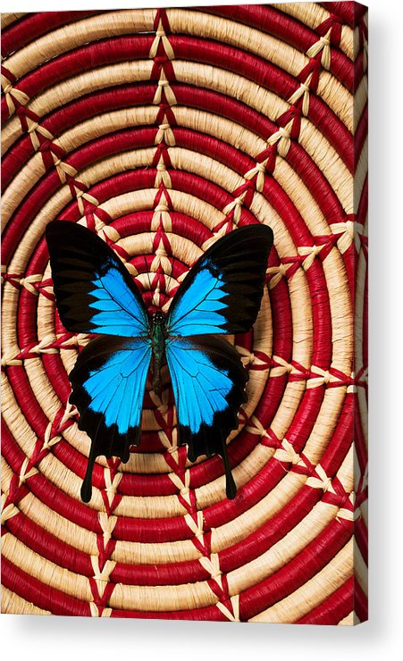 Butterfly Acrylic Print featuring the photograph Blue Black Butterfly In Basket by Garry Gay