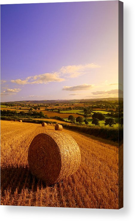 Devon Acrylic Print featuring the photograph Devon Haybales by Neil Buchan-Grant