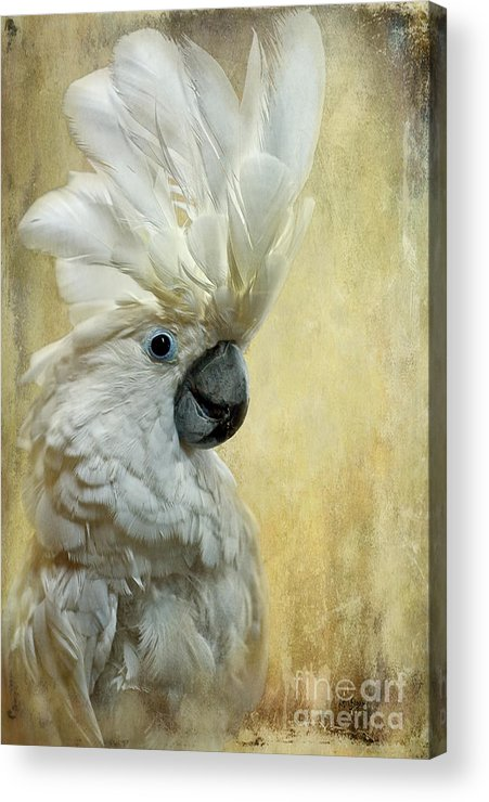 Cockatoo Acrylic Print featuring the photograph Glamour Girl by Lois Bryan