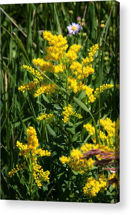 Wildflowers Acrylic Print featuring the photograph Golden October by Christine Till