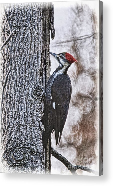 Woodpecker Acrylic Print featuring the photograph Knock Knock by Lois Bryan