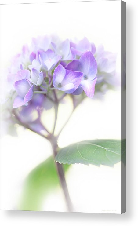 Hydrangea Acrylic Print featuring the photograph Misty Hydrangea Flower by Jennie Marie Schell