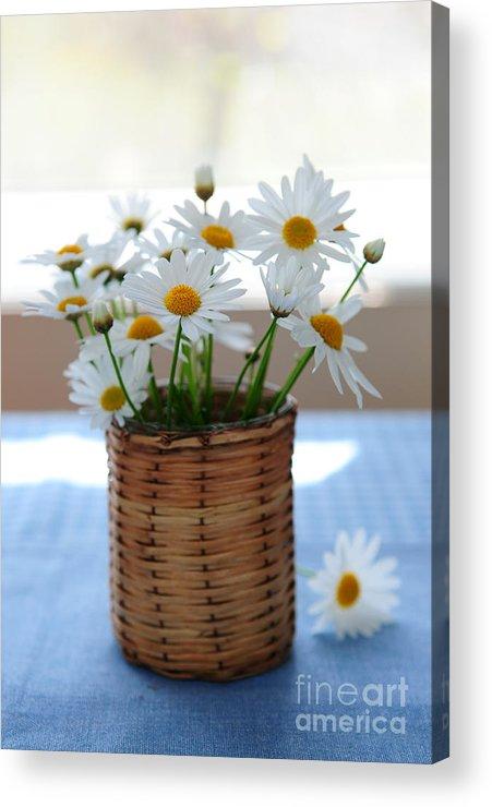 Daisy Acrylic Print featuring the photograph Morning Daisies by Elena Elisseeva