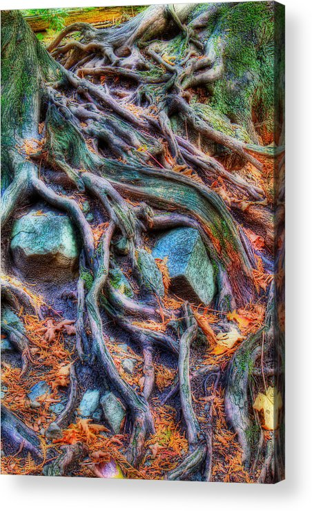 Tree Roots Acrylic Print featuring the photograph Roots And Rocks by Naman Imagery