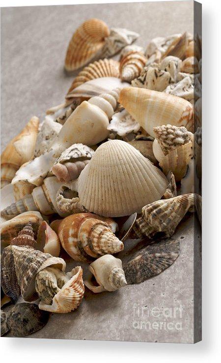 Crustacean Acrylic Print featuring the photograph Shellfish Shells by Bernard Jaubert