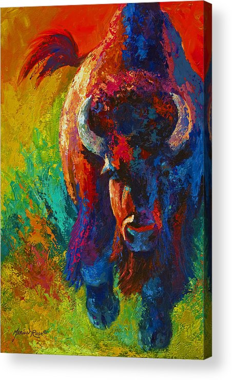 Wildlife Acrylic Print featuring the painting Straight Forward Introduction - Bison by Marion Rose