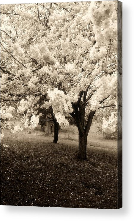 Black And White Acrylic Print featuring the photograph Waiting For Sunday - Holmdel Park by Angie Tirado