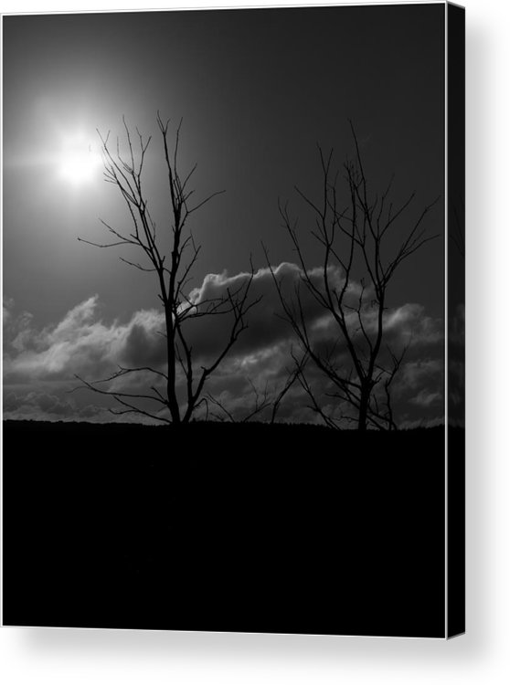 Tree Acrylic Print featuring the photograph Reach For The Sun by Nigel Jones