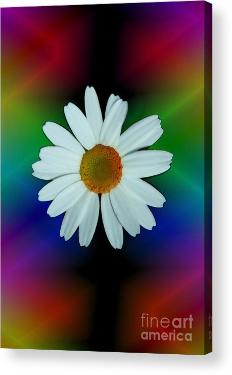 Abstract Acrylic Print featuring the photograph Daisy Bloom In Neon Rainbow Lights by ImagesAsArt Photos And Graphics