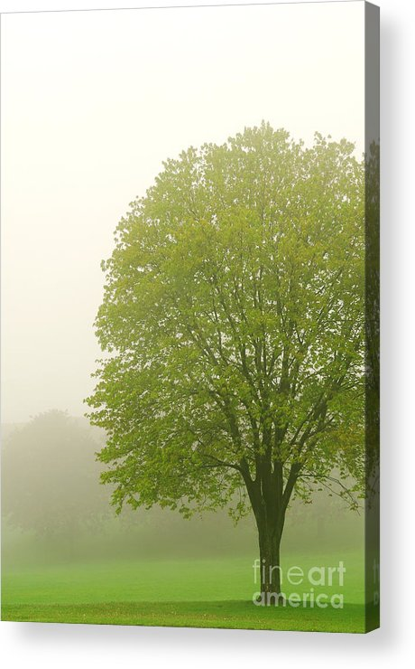 Fog Acrylic Print featuring the photograph Tree In Fog by Elena Elisseeva