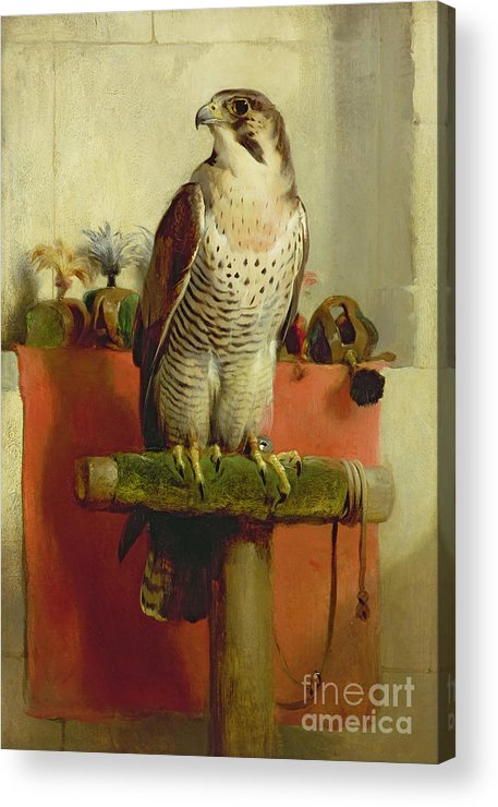 Falcon Acrylic Print featuring the painting Falcon by Sir Edwin Landseer
