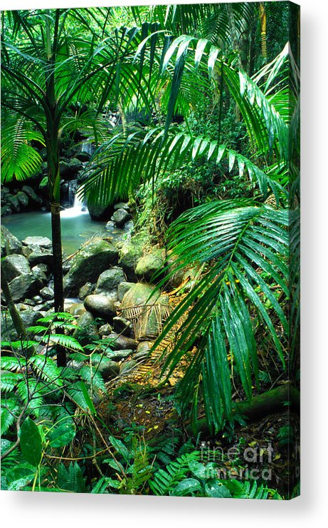 Puerto Rico Acrylic Print featuring the photograph El Yunque Palm Trees And Waterfall by Thomas R Fletcher