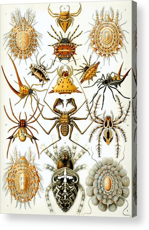 Arachnida Acrylic Print featuring the digital art Arachnida by Georgia Fowler