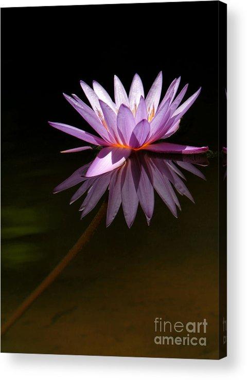 Macro Acrylic Print featuring the photograph Lavendar Reflections by Sabrina L Ryan