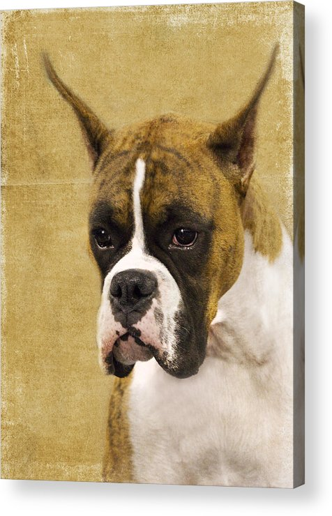Boxer Acrylic Print featuring the photograph Boxer by Rebecca Cozart