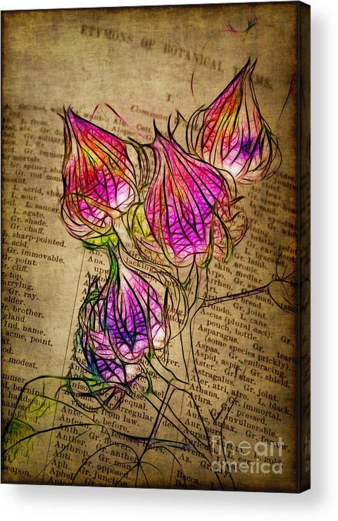 Seedpods Acrylic Print featuring the photograph Faerie Caps by Judi Bagwell