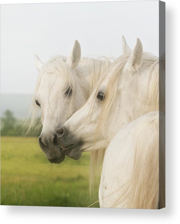Horse Acrylic Print featuring the photograph Horse Kiss by ELA-EquusArt
