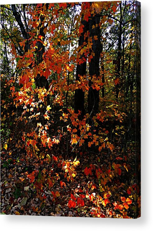 Autumn Scenes Acrylic Print featuring the photograph A Slash Of Sunlight by Julie Dant